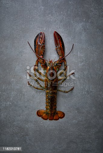 a Lobster on concrete surface