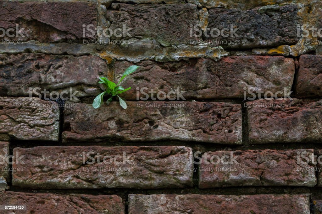 a lonely green sprout growing through the brickwork stock photo