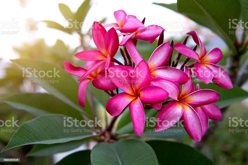 a lot of beautiful, colourful flowers growing in the tropics. exotic, rare flowe stock photo