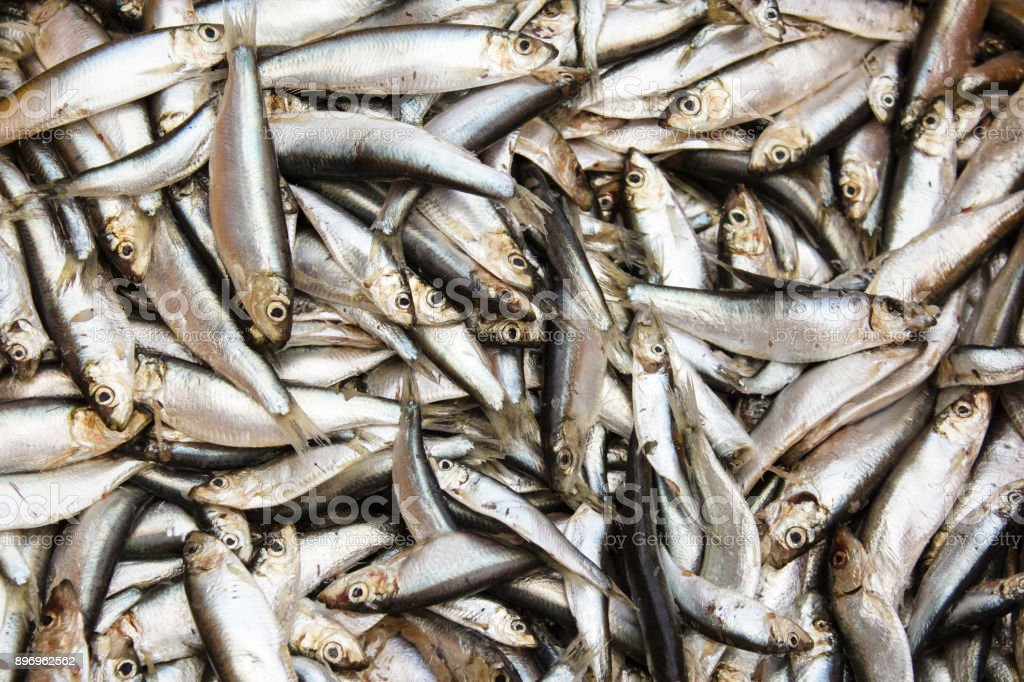 a lot of small frozen fish, sprat, herring. stock photo