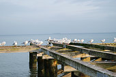 a lot of white gulls sitting on the wooden pier