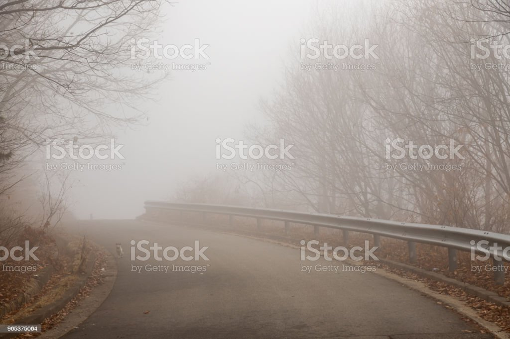 a misty road royalty-free stock photo