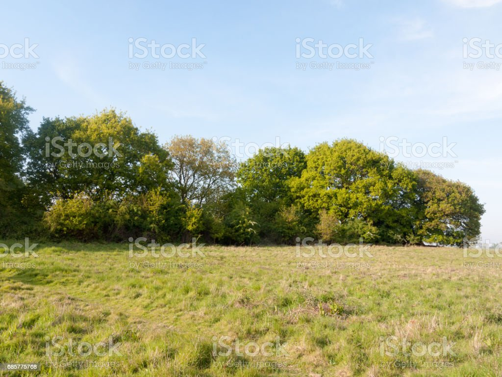 a nice country tree line lush growing green in a field on a peaceful sunny day outside royalty-free stock photo