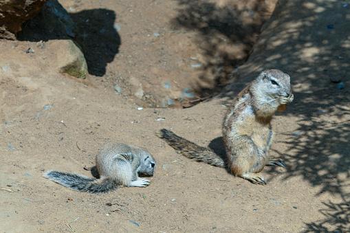 Een Paar Van Chipmunks Zijn Wassen In De Nabijheid Van Hun Gaten Stockfoto en meer beelden van Beschermd natuurgebied