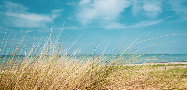 Ein Panoramabild des Ostseestrandes im Sommer mit Dünengras im Vordergrund und blauem Meerwasser im Hintergrund und blauem Himmel im Hintergrund – Foto