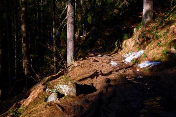 Ein Weg im Wald – Foto