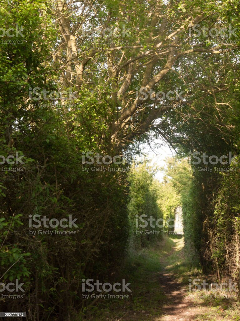 a pathway through a meadow with tree archway wonderful journey walking through country spring royalty-free stock photo