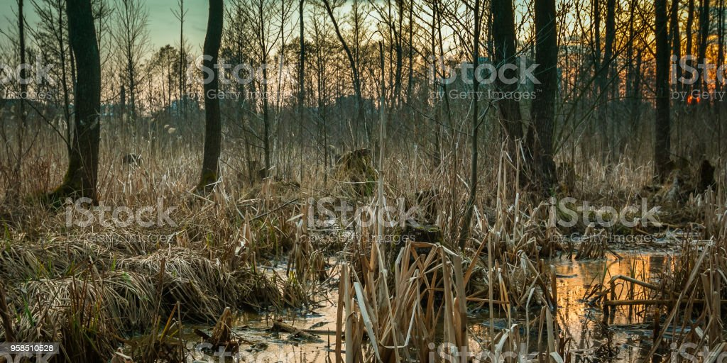 a picturesque spring marsh on the outskirts of the city stock photo