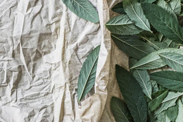 ein Haufen von grünen Blättern auf Papier – Foto