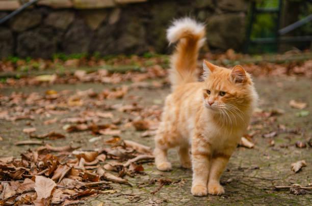 a red cat – zdjęcie