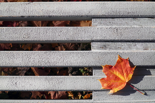 Maple leaf in autumn on a bench