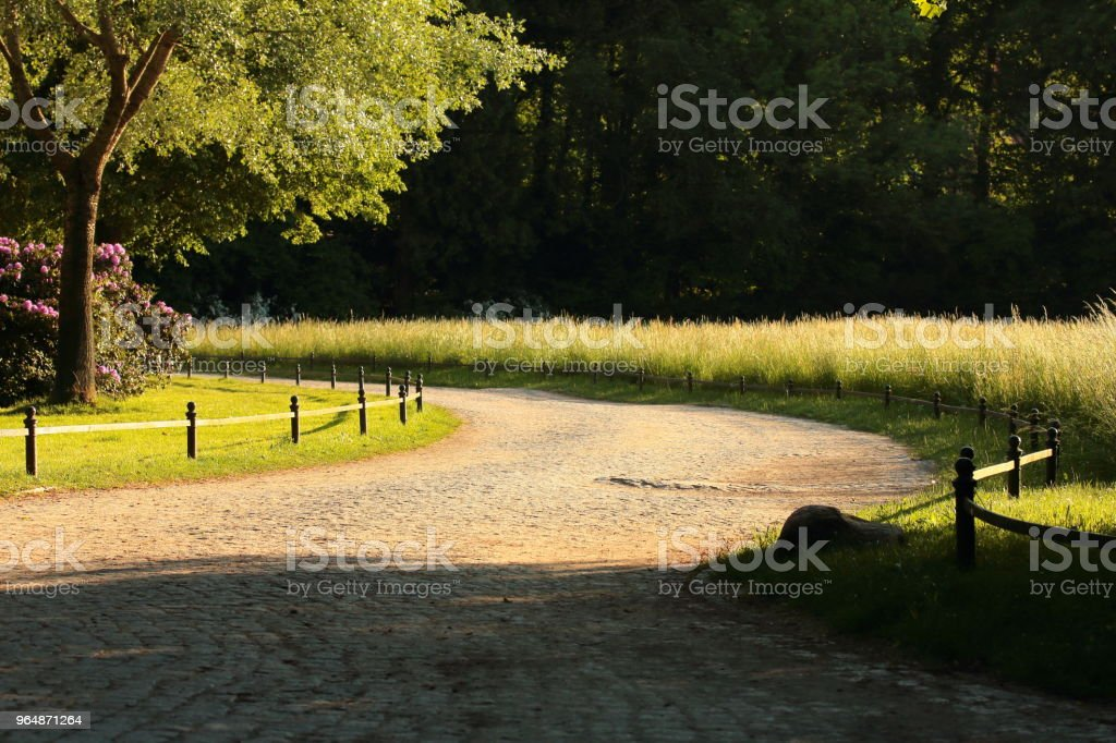 a road in a park with trees and flowers royalty-free stock photo
