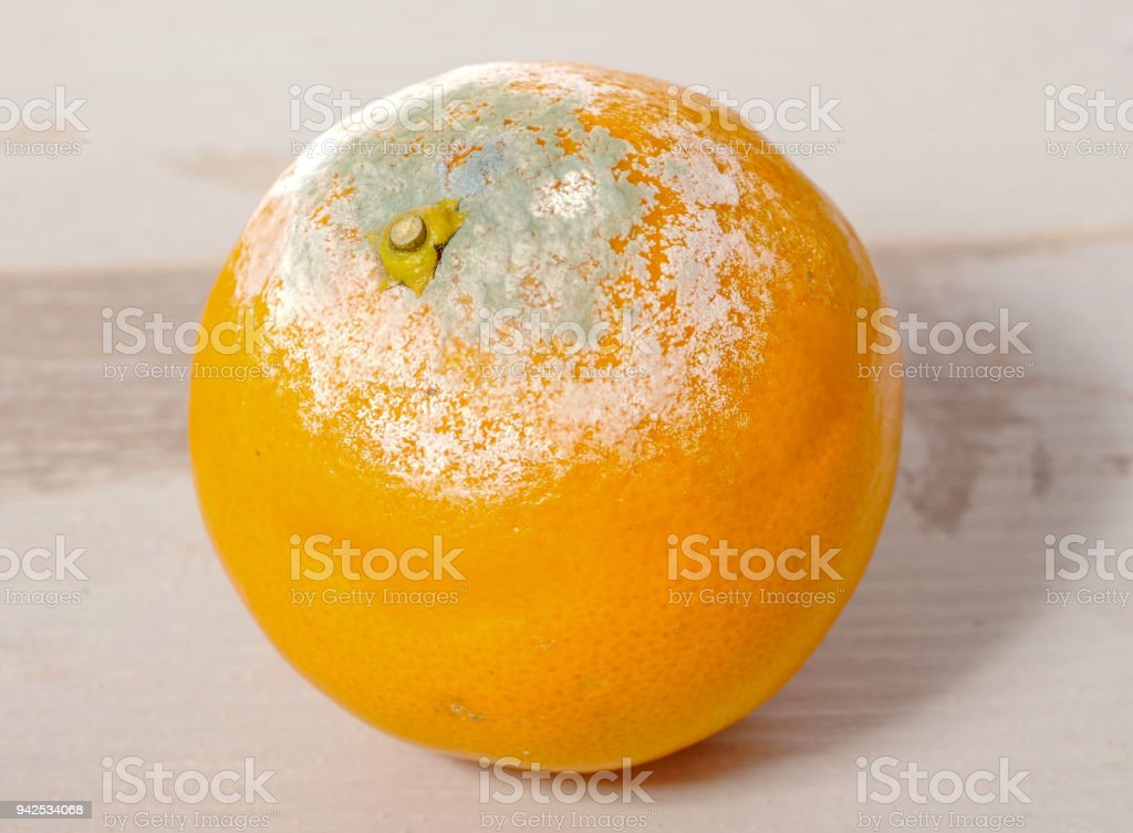 a rotten orange on the wooden table stock photo