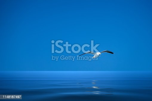 An image of a seagull over the ocean