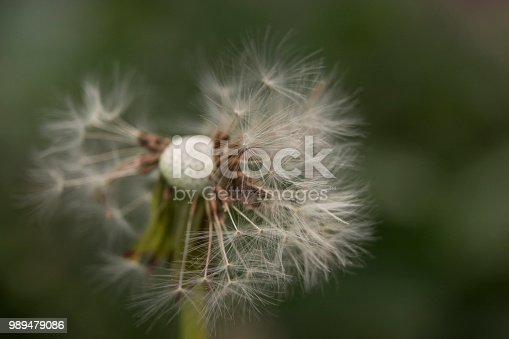 istock a sense of freedom - at the sight of this dandelion 989479086