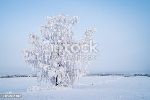 istock a single tree in an empty field 1124835192