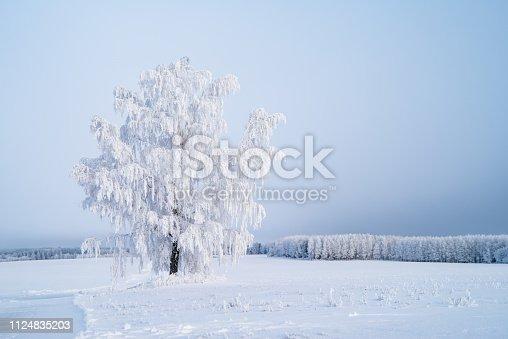 istock a single tree in an empty field 1124835203
