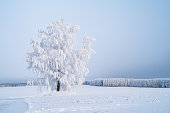 winter trees with frost, wery cold day, snow-covered landscape, only snow and trees, snowy winter road, Christmas card, \nholiday card, a single tree in an empty field