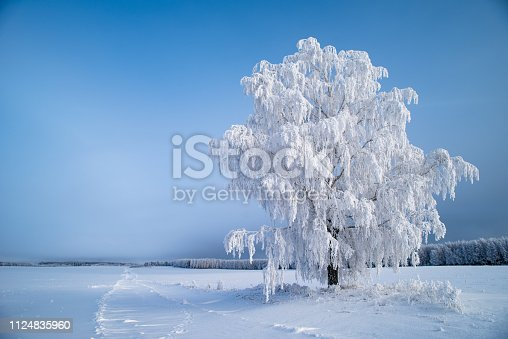 winter trees with frost, wery cold day, snow-covered landscape, only snow and trees, snowy winter road, Christmas card,  holiday card, a single tree in an empty field, One bare tree on horizon over snowy field