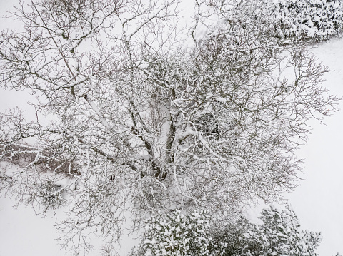 tree aerial view, frost covered tree, drone point of view, aerial view, winter, a single winter tree