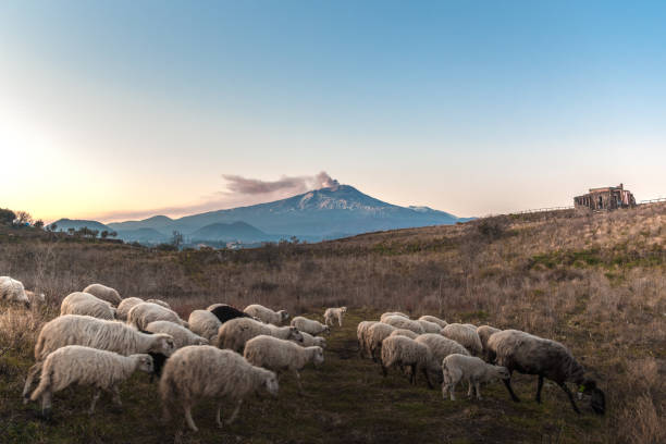 a small flock and a volcano in the background – zdjęcie
