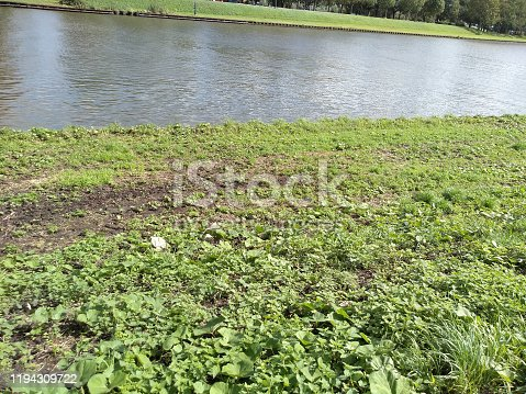 a small river in the netherlands at summertime