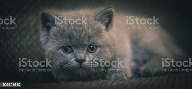 A small scared kitten picture id903121610?b=1&k=6&m=903121610&s=612x612&h=ykfqqeu8ls9mk6qsuchiumuf byac  5qpt2b9ks6fk=