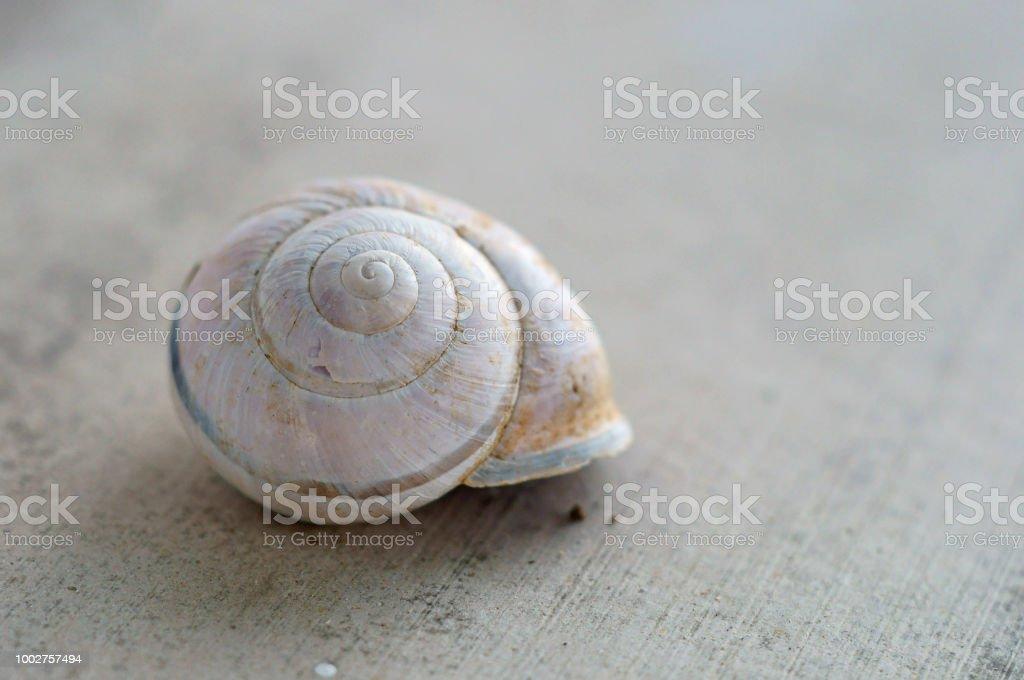 une coquille d'escargot petit - Photo