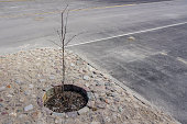 a small tree planted in a small box on a cobbled square