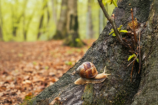 a snail on a tree in the forest