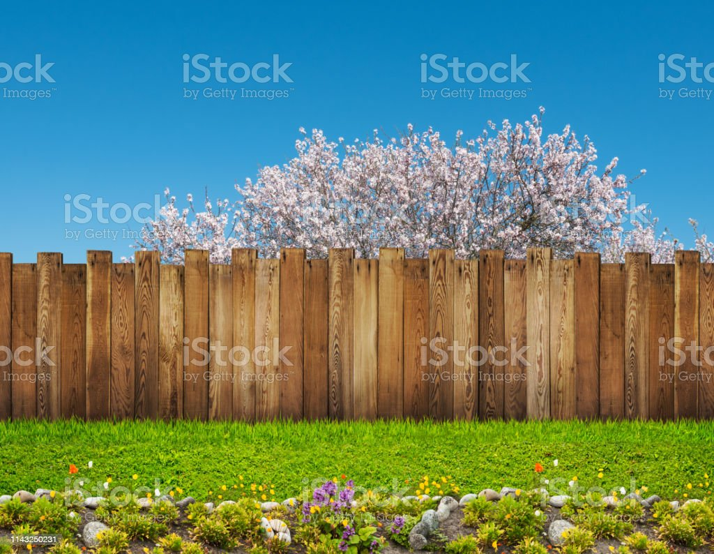 A Spring Bloom Tree In Backyard And Wooden Garden Fence Stock