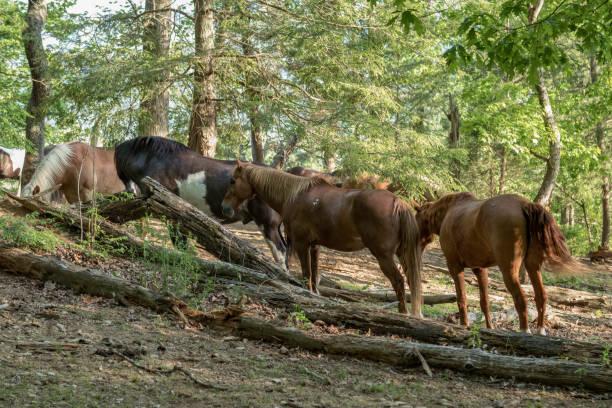 ein eichhörnchen lebt in einem baum - pferdezeitschrift stock-fotos und bilder