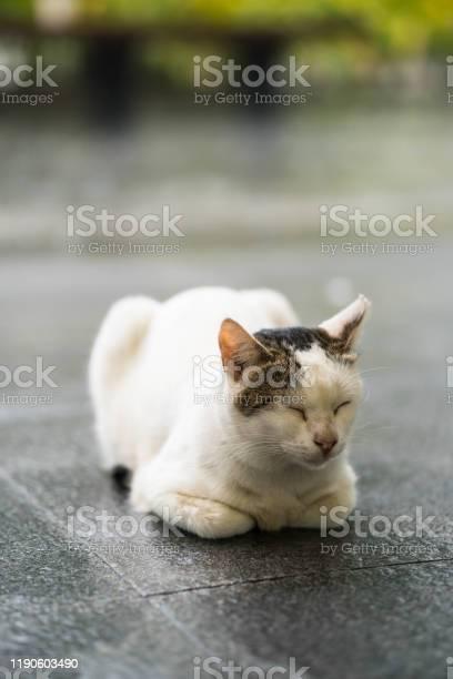 A stray cat in sphinx position picture id1190603490?b=1&k=6&m=1190603490&s=612x612&h=90zb bczpfixhwcthscjzfcwzxtebm ubyfyxdsqcvy=