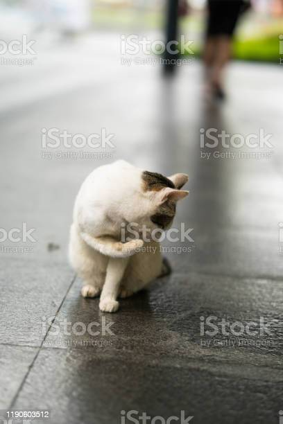A stray cat sleeping picture id1190603512?b=1&k=6&m=1190603512&s=612x612&h=o6iqcdqd21wfwmojbfen9vx0yuowmvaj7xmu9pijuxc=
