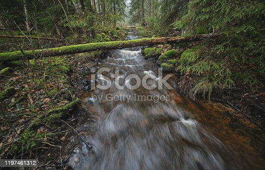 a stream in dense forest with running water and a tree trunk lying above the water