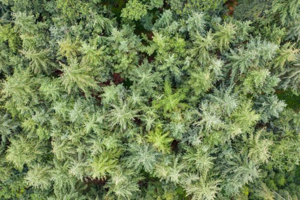 eine Top-Ansicht eines grünen Mischwaldes – Foto