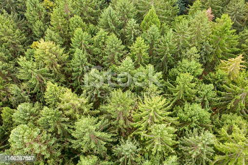 a top view of a green mixed forest
