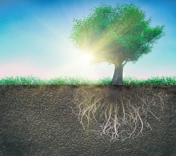 a tree and soil with roots and grass isolated tree and soil with roots and grass 3D illustration root stock pictures, royalty-free photos & images