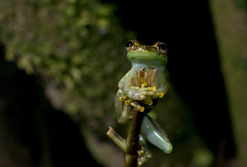 a tree frog close up