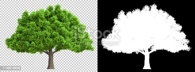 tree isolated with high detailed leaves with clipping path and alpha channel