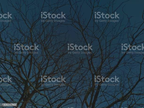 Photo of a tree that already has no leaves against a sky background