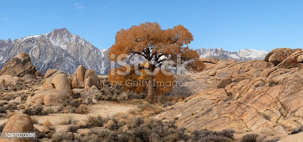 This is a picture of a tree with autumn color at Alabama Hills, Lone Pine.