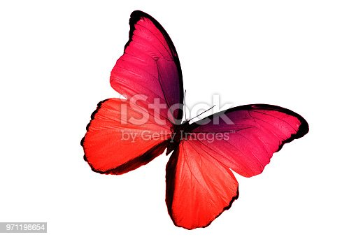 999676880 istock photo a tropical butterfly of red color. isolated on white background 971198654