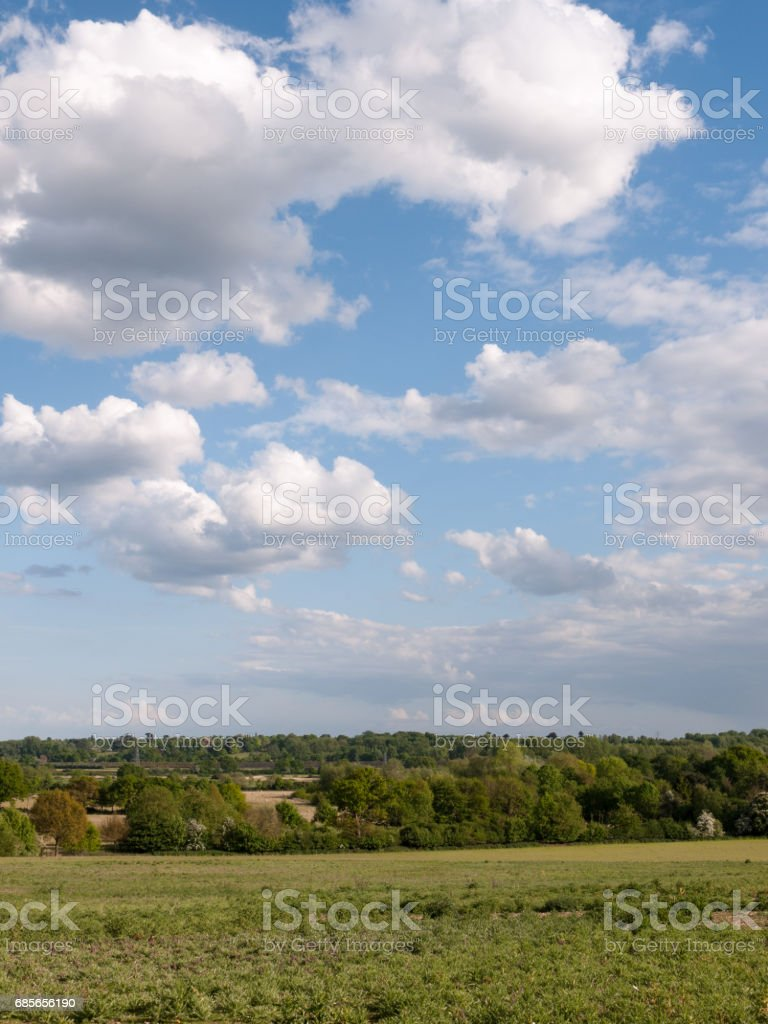 a vertical shot of a countryside scene with grass at the bottom and trees in the distance as well as a blue and white clouded and mostly clear sky above on a summer's day in essex england stock photo