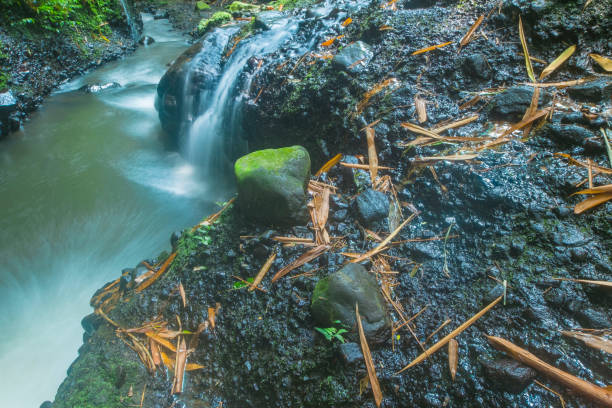 a very swift river flow with black stones & mossy stock photo