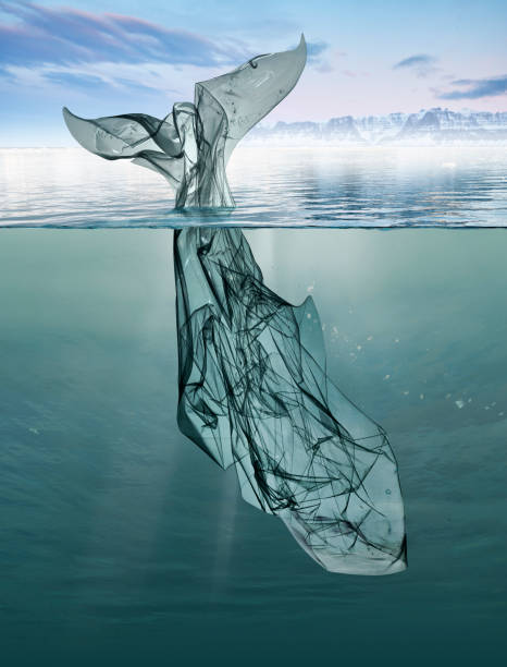 a whale of garbage plastic floating in the ocean. a whale of garbage plastic floating in the ocean whale stock pictures, royalty-free photos & images