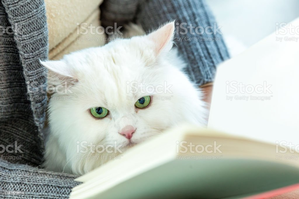 Adult, Pets, Clothing, Embracing, Holding a cat and reading a book.