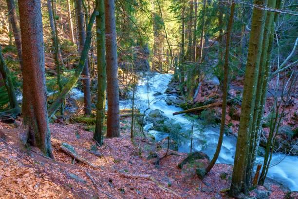 Ein wilder Bach im Bayerischen Wald – Foto