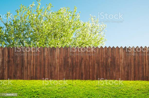 Photo of a wooden garden fence at backyard and bloom tree in spring