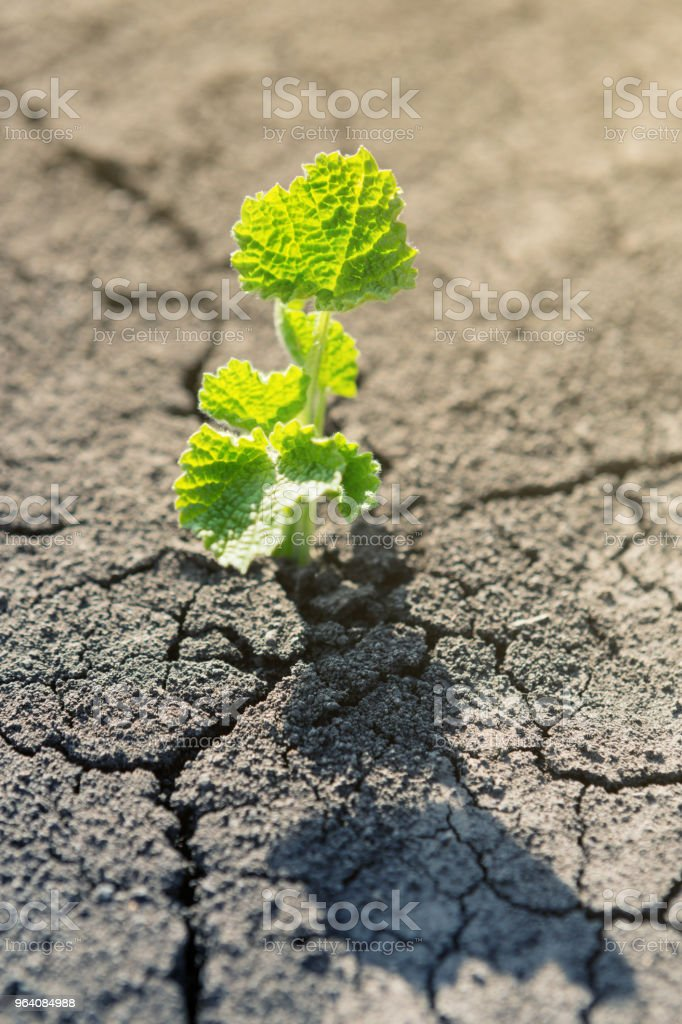 a young green plant in a dry brown earth among cracks, a concept of ecology - Royalty-free Accidents and Disasters Stock Photo